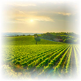 vineyard hubspot